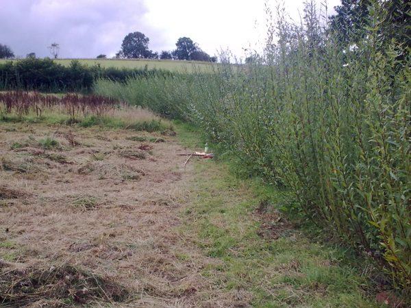 Year 2 willow September 2010
