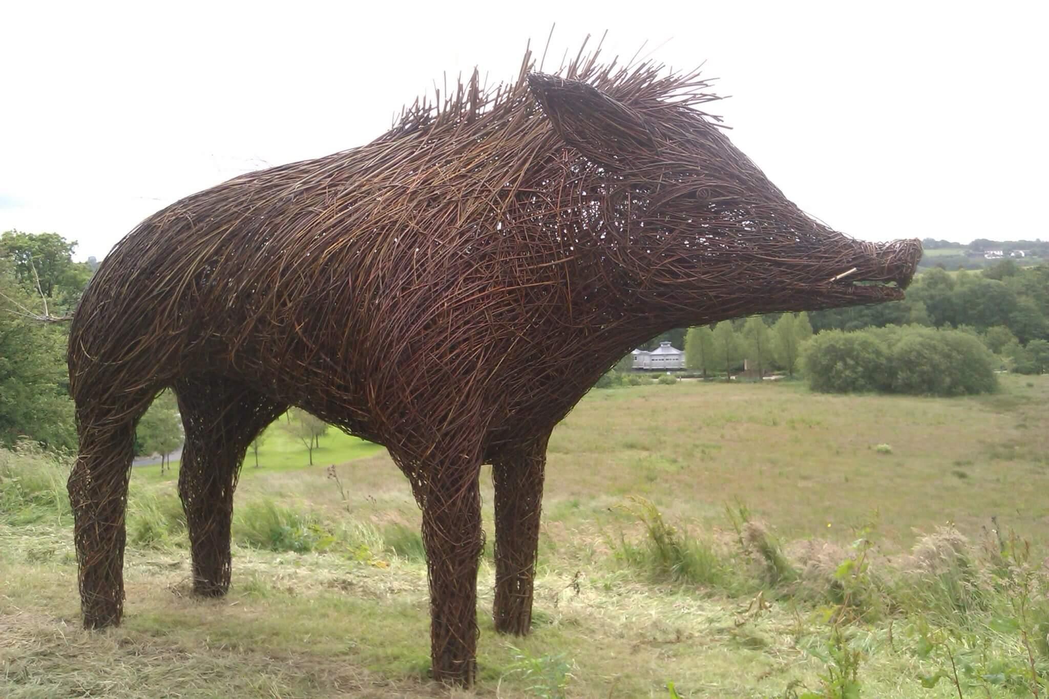 Wild boar at National Botanic Garden of Wales