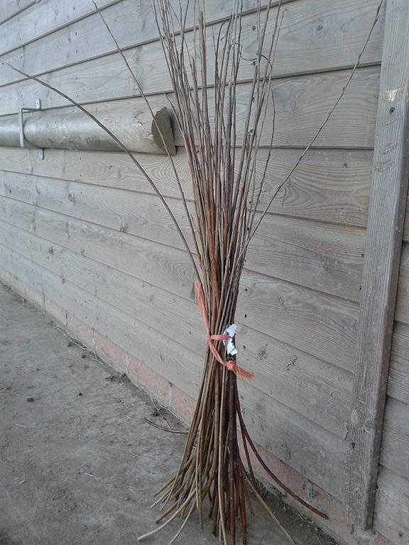 3 foot dried willow bundle
