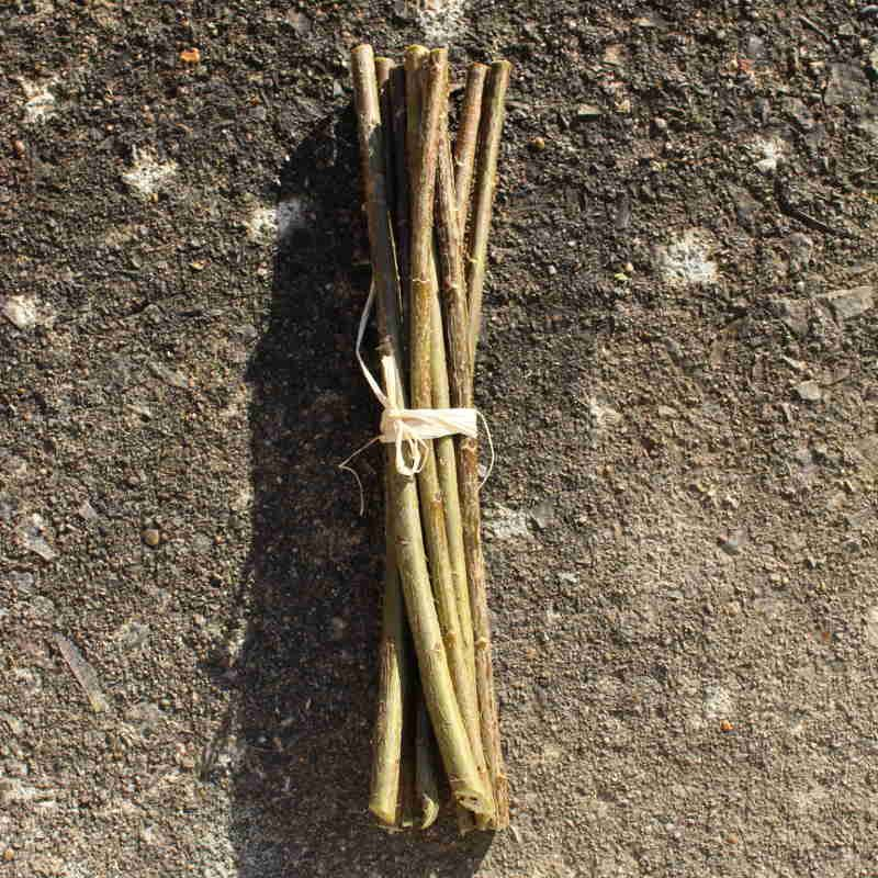Black maul willow cuttings