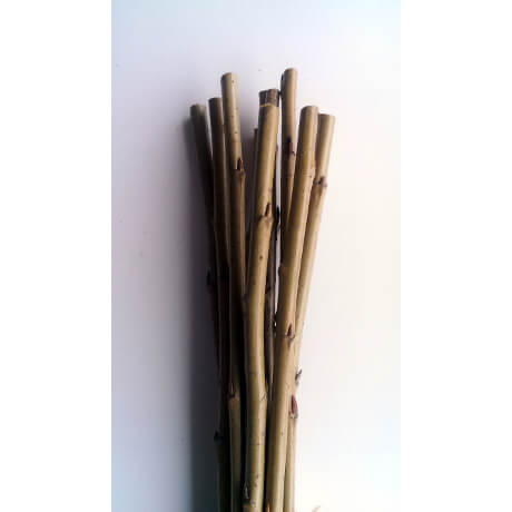 White welsh willow cuttings close