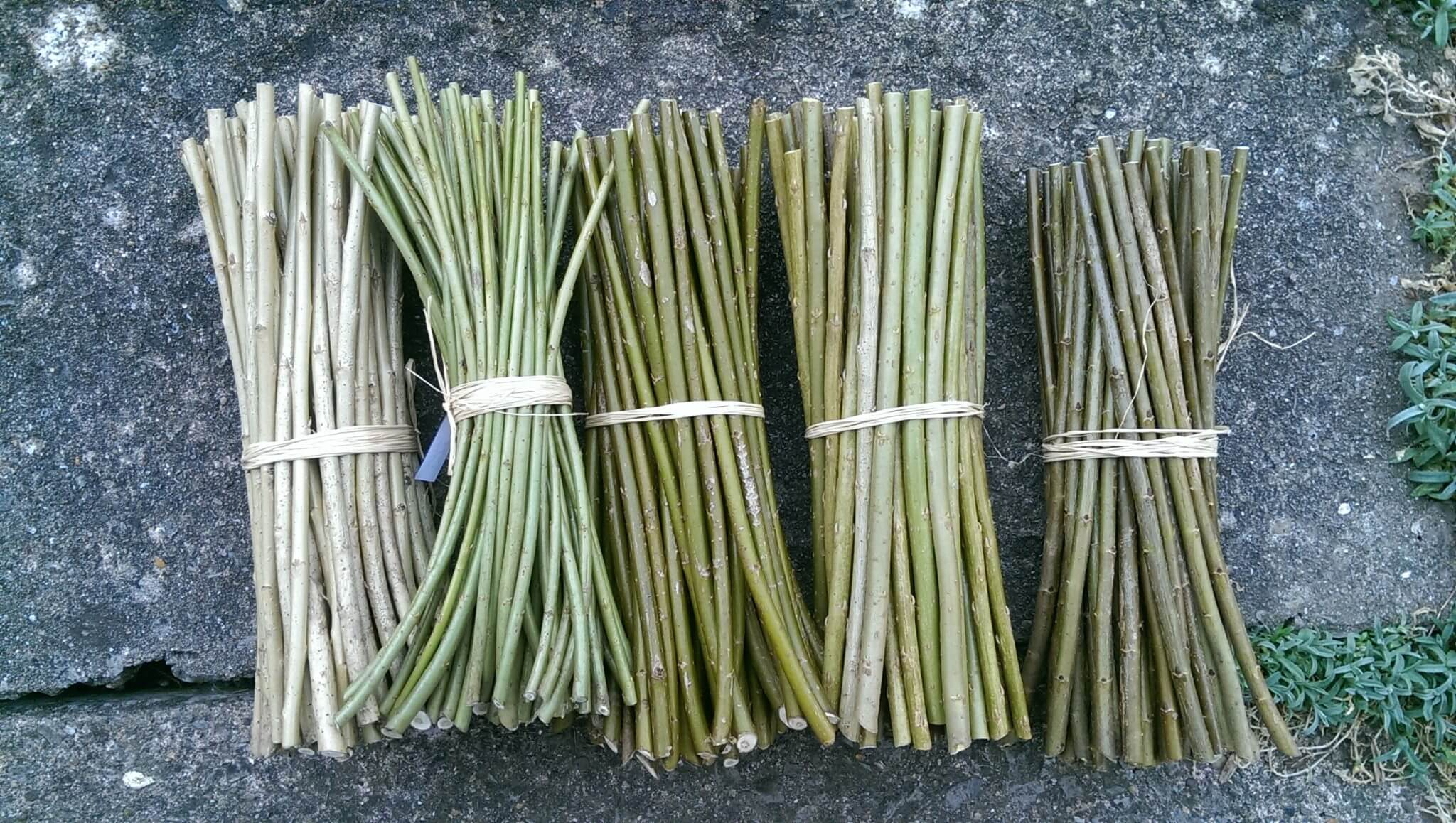 Willow cuttings