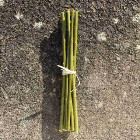 Whissender willow cuttings