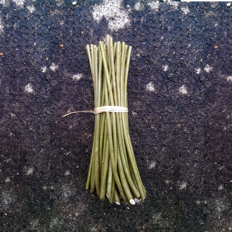 Dicky meadows willow cuttings
